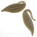 Walrus Jawbone Philodendron