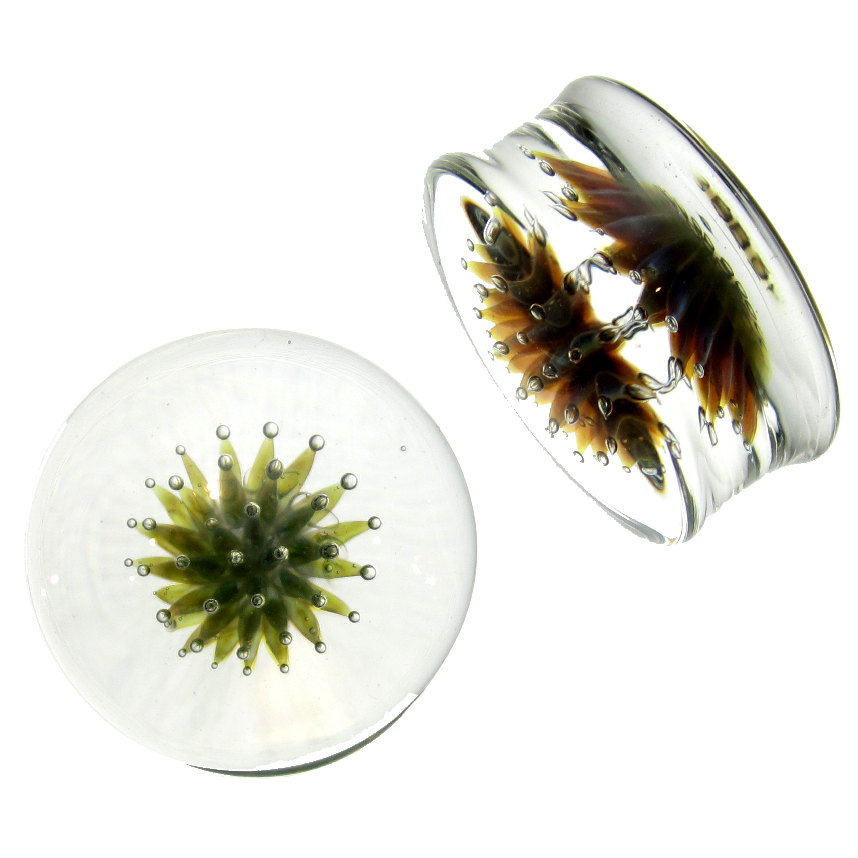 Glass Spore Plugs
